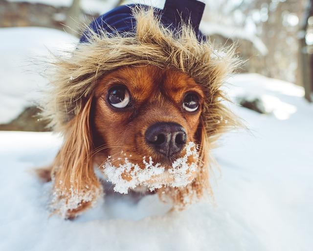Как не замерзнуть в мороз на улице