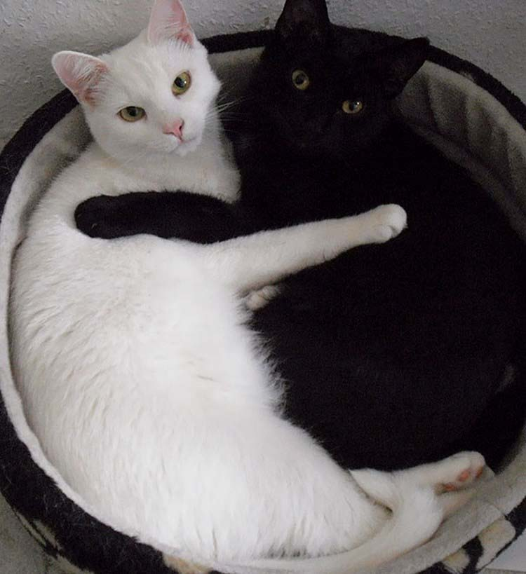 Интересные приметы и суеверия. Черные коты и кошки