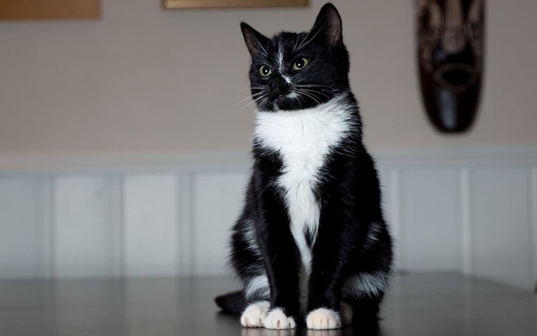 Кошки. Приметы и поверья
